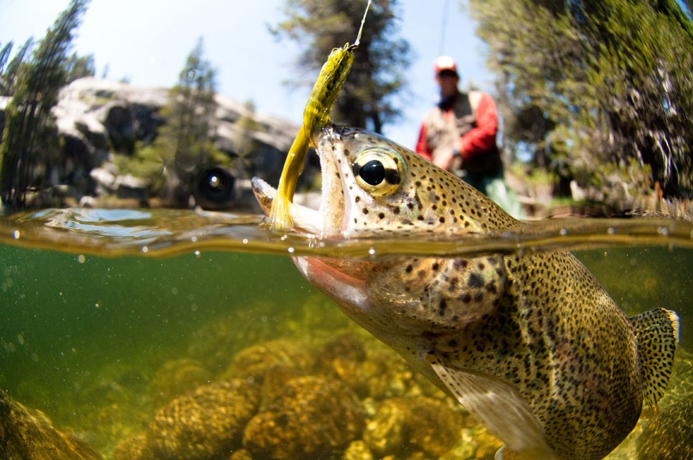 how to catch a trout