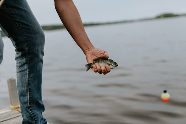 How Long can a Fish Live Out of Water and Types of Fishes that Can do Without it