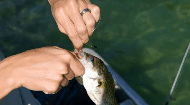 How-To-Tie-On-A-Spinnerbait
