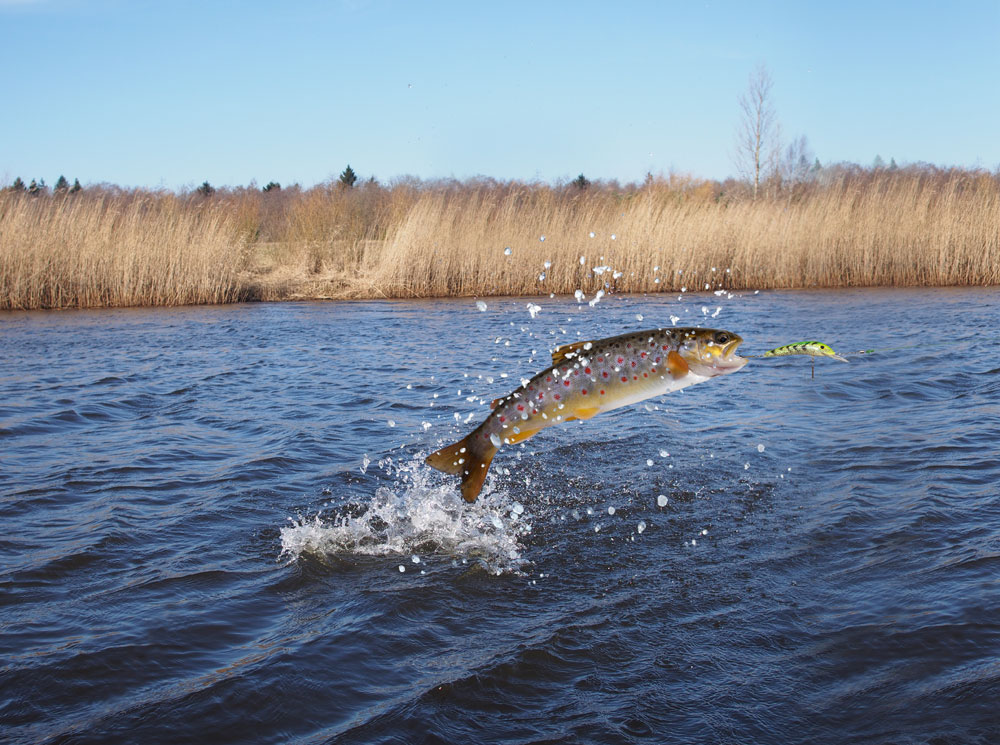 best power bait for trout fishing