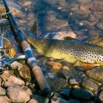 best spinning rod for trout fishing