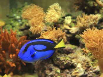 How to Control Algae in a Saltwater Aquarium