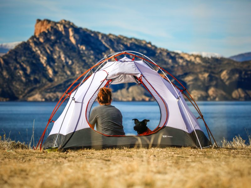 11 Most Useful Quick Tips To Help You Camping with Dogs