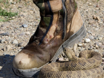 Best Snake Proof Boots Reviews 2021 – Buyer's Guide