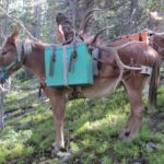 best ways to pack game meats